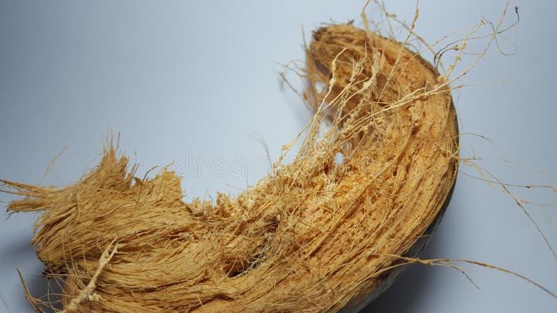 Coir oder Coir, ist eine natürliche Faser, die von der Hülsen der Kokosnuss extrahiert wird lizenzfreies stockfoto
