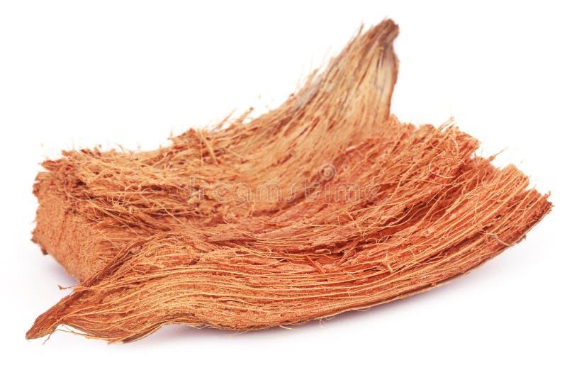 Coir von Kokosnüssen stockbild