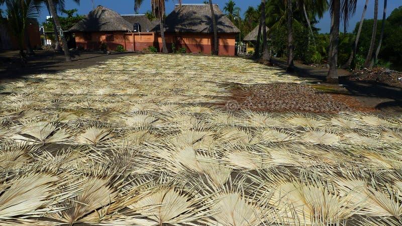 Coisas secadas tropicais, folhas de palmeira e peixes foto de stock royalty free