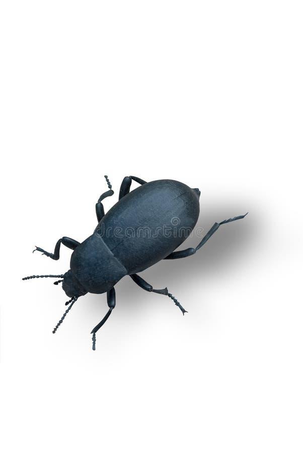 Coléoptère de fumier d'insecte photographie stock
