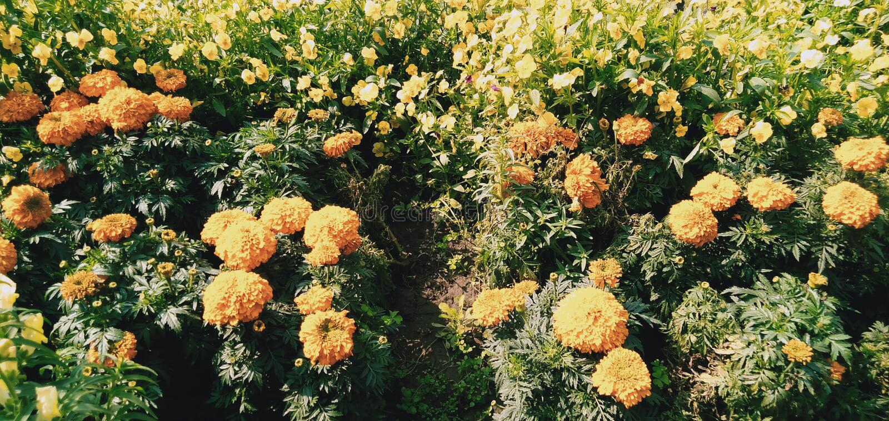 Colônia das flores fotos de stock royalty free