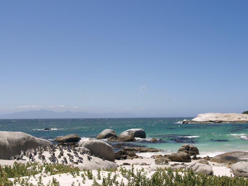 A colônia dos pinguins em pedregulhos encalha, Cape Town, África do Sul fotos de stock royalty free