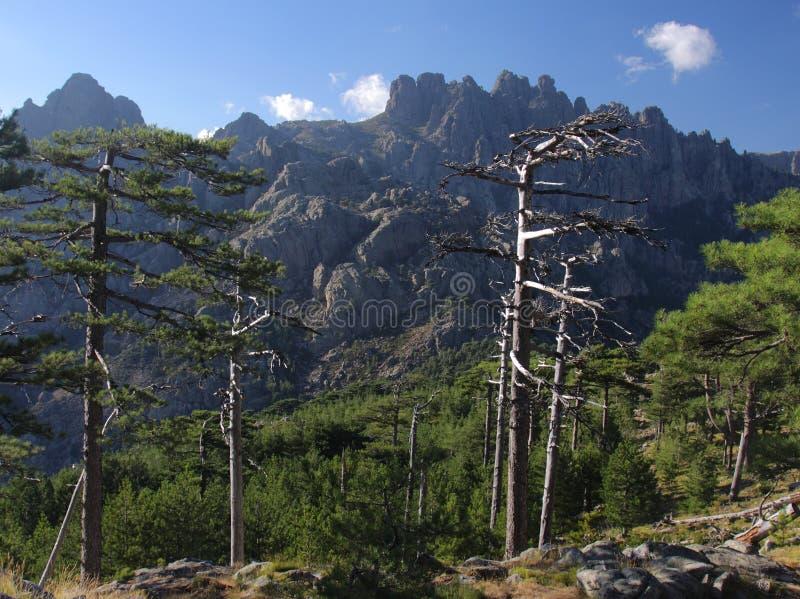 Col de Bavella, Corsica, Francia immagine stock libera da diritti