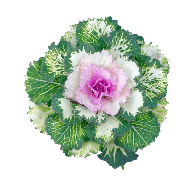 Col ornamental colorida fotografía de archivo