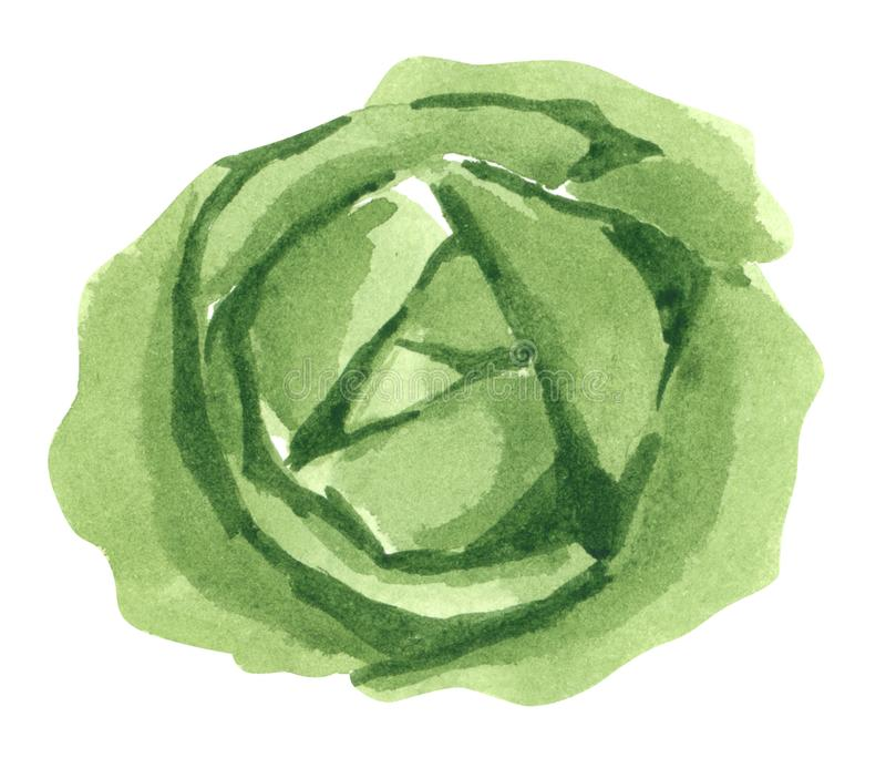 Col vegetal, dirigida, ejemplo exhausto de la acuarela de la mano stock de ilustración