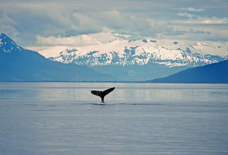 Cola de la ballena de Humpback fotografía de archivo