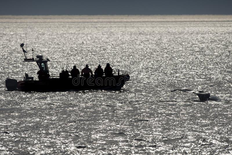 Cola de la ballena jorobada cerca del zodiaco fotos de archivo libres de regalías