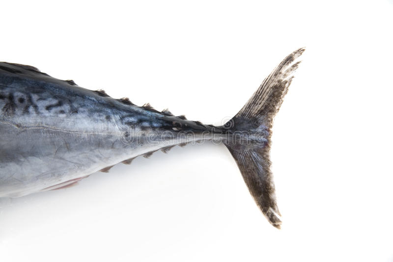 Cola de los pescados de atún foto de archivo libre de regalías