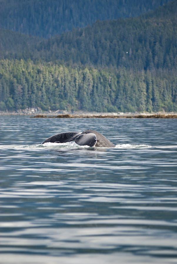 Cola del paisaje y de la ballena jorobada foto de archivo