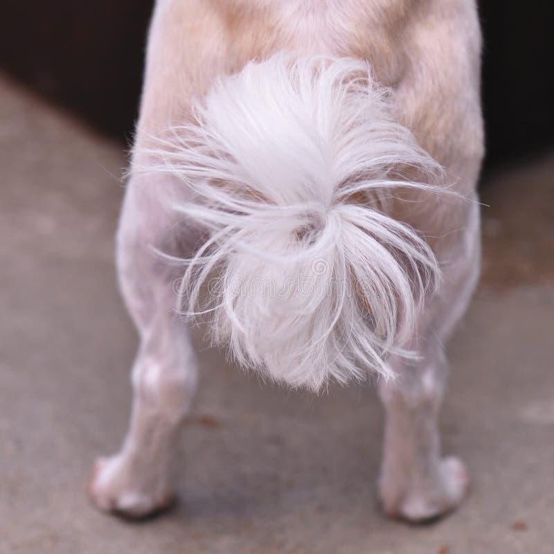 Download Cola del perro imagen de archivo. Imagen de animal, curiosidad - 100535817