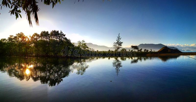 Colaboración de vistas de los estuarios y de los bosques del mangle fotos de archivo