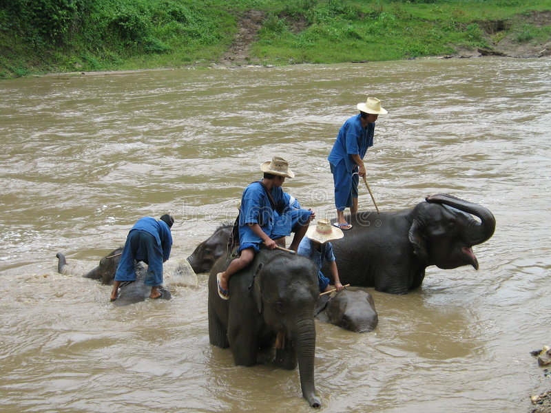 Colada de los elefantes en Tailandia imagenes de archivo