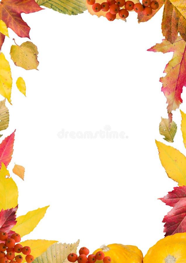 Colagem brilhante, colorida das folhas de outono, para o quadro, verticais foto de stock