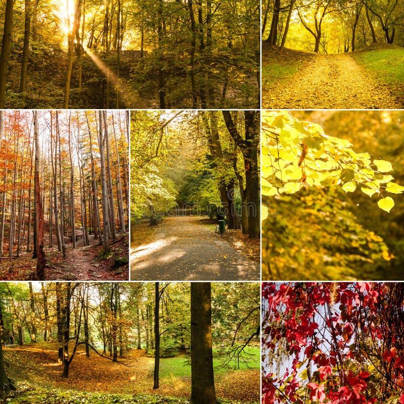 Colagem com coleção do outono foto de stock