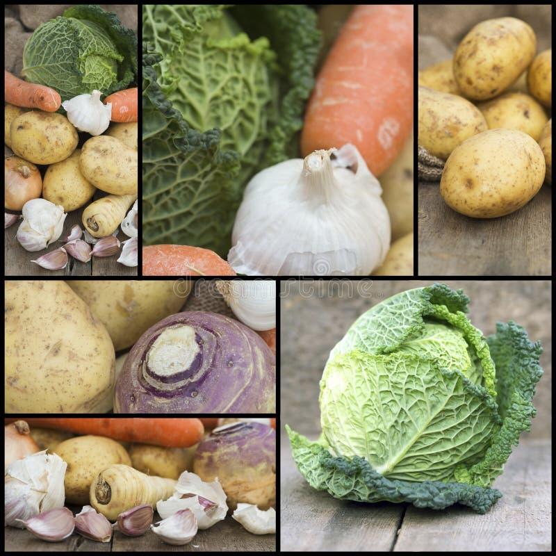 Colagem da compilação dos alimentos frescos com um tema do vegetab do inverno imagem de stock