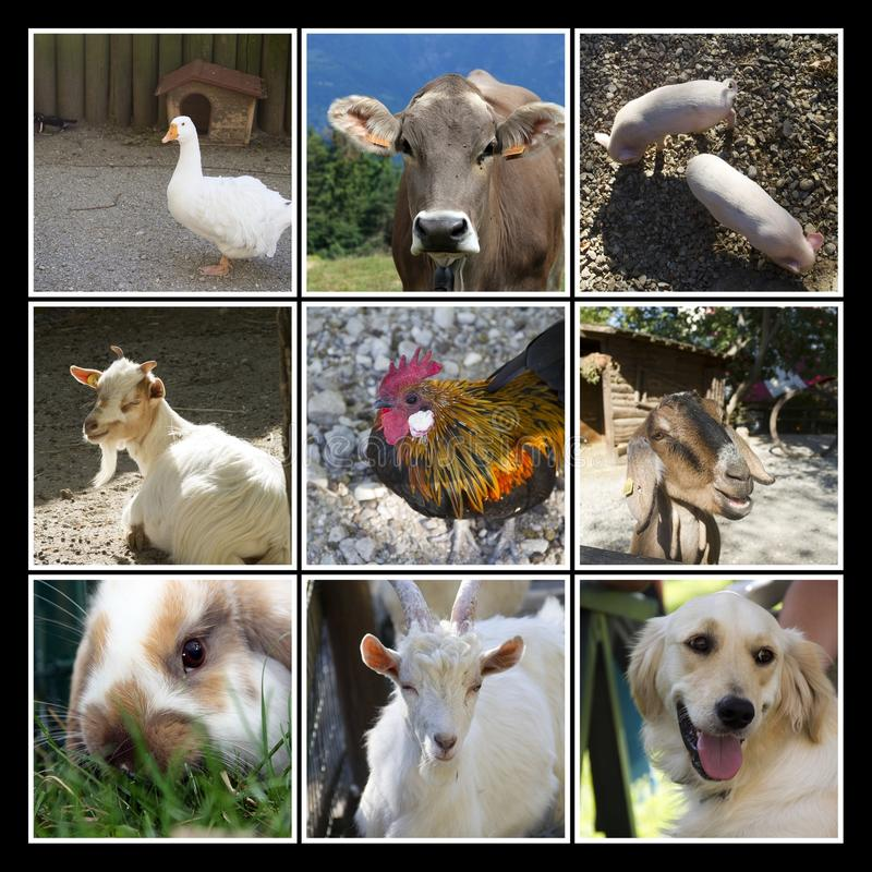 Colagem da exploração agrícola de animais fotos de stock