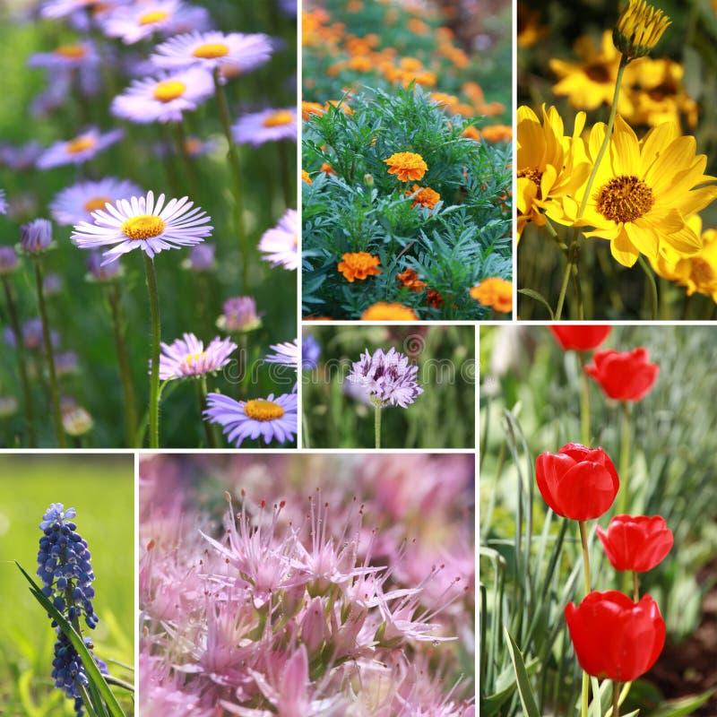 Colagem da flor da mola dos diversos imagem foto de stock