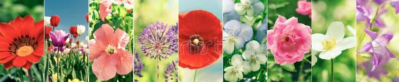 Colagem da flor de vários tipos flores do verão fotos de stock