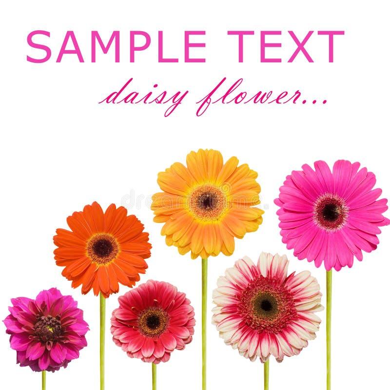 Colagem da flor do Gerbera imagens de stock