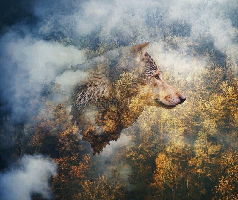 Colagem da foto: Cabeça do lobo no fundo de Autumn Forest foto de stock