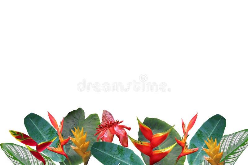 Colagem da foto de Heliconia e flores e folhas do gengibre no fundo do coral do inclinação imagens de stock royalty free