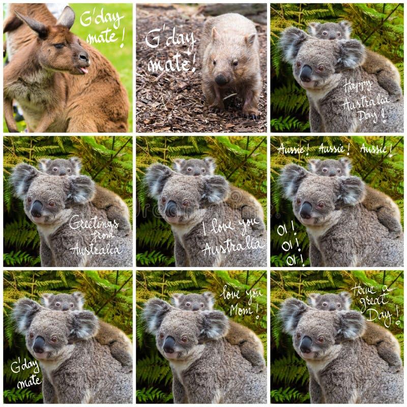Colagem da foto do animal nativo da coala australiana e de vários cumprimentos foto de stock royalty free