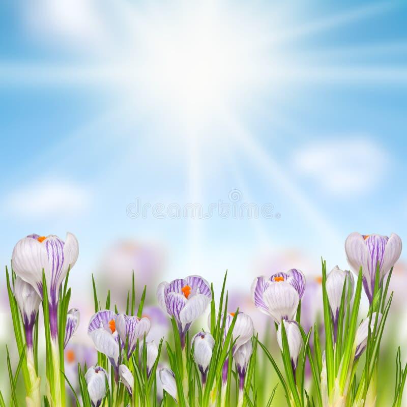 Download Flores bonitas da mola foto de stock. Imagem de naughty - 29826100