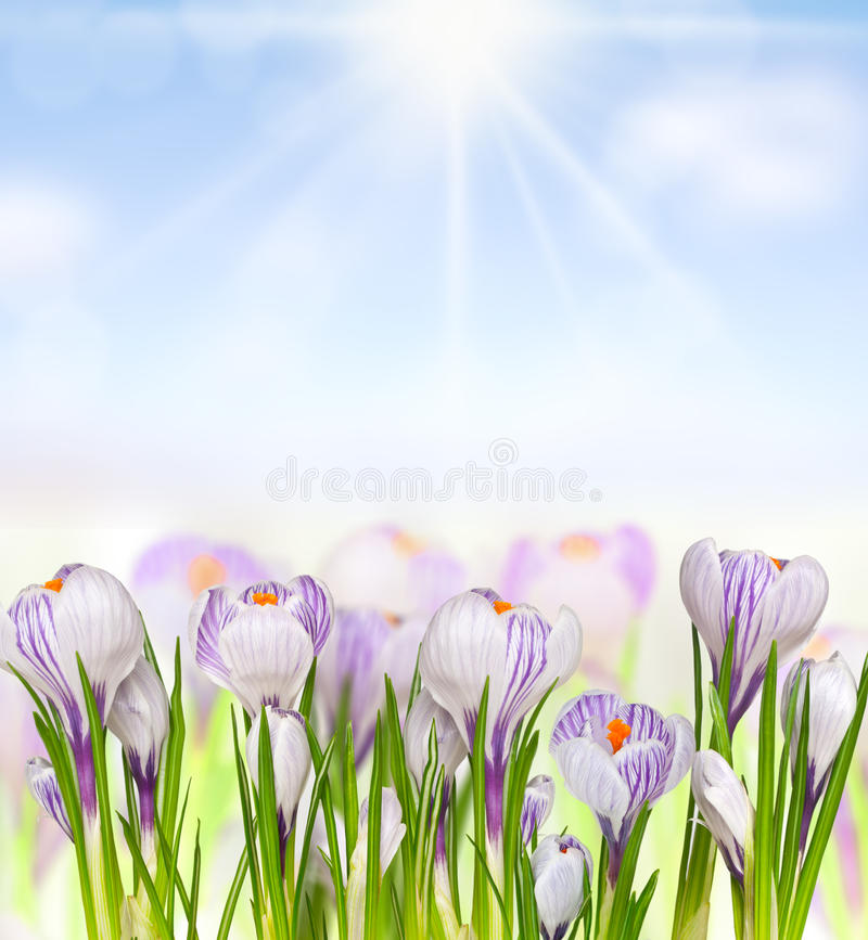 Download Flores bonitas da mola foto de stock. Imagem de bouquet - 29826126