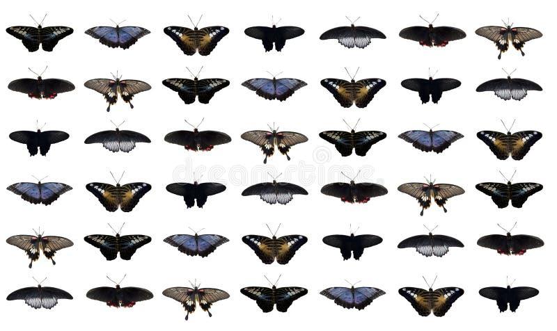 Colagem das borboletas fotos de stock royalty free