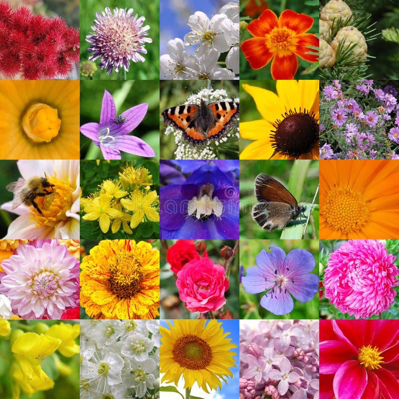 Colagem das cores bonitas fotos de stock