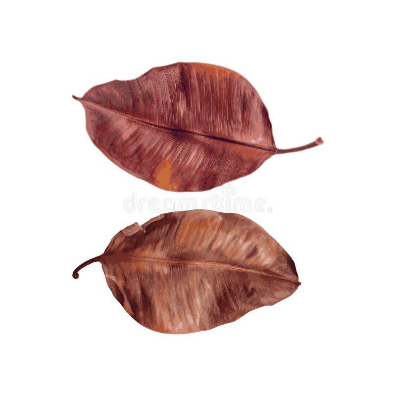 Colagem das folhas bonitas do marrom do outono ilustração royalty free