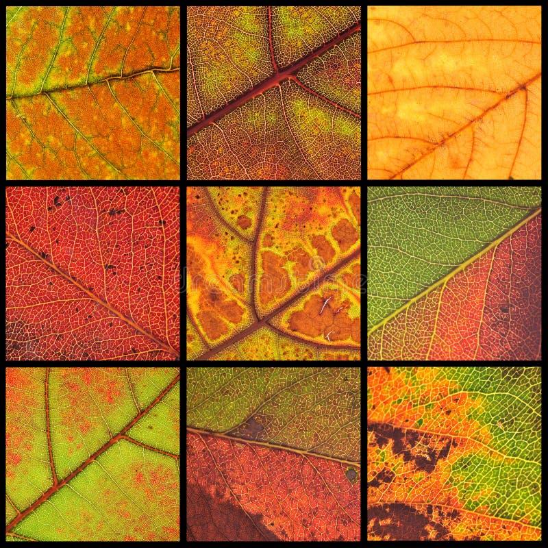 Colagem das folhas de outono imagem de stock royalty free