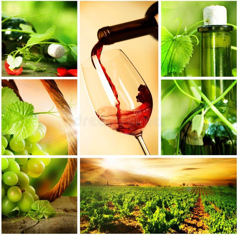 Colagem das uvas de Wine.Beautiful fotografia de stock royalty free