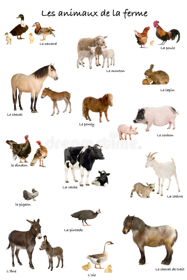 Colagem de animais de exploração agrícola em francês imagens de stock royalty free
