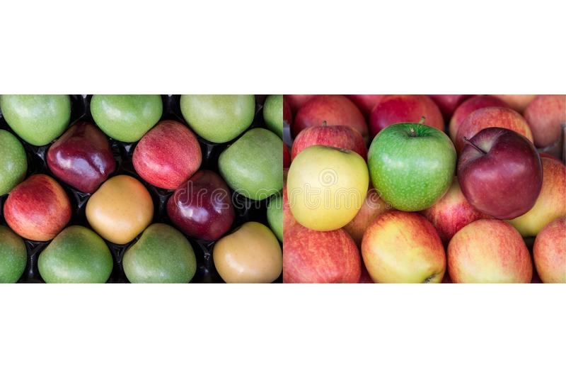 A colagem de duas fotos de quatro maçãs maduras diferentes datilografa imagens de stock royalty free