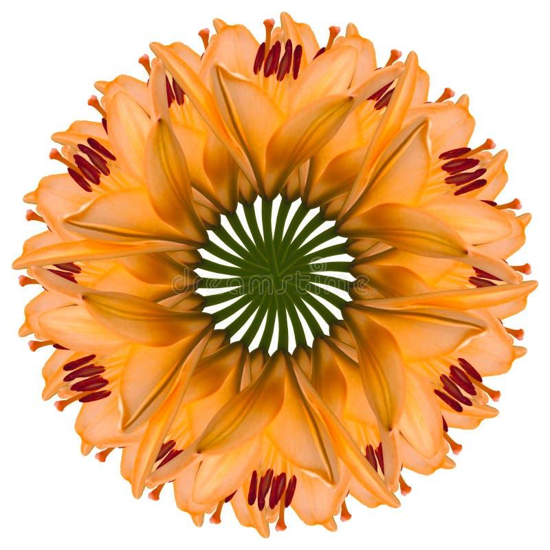 Colagem de flores bonitas alaranjadas do l?rio em um fundo branco imagem de stock royalty free