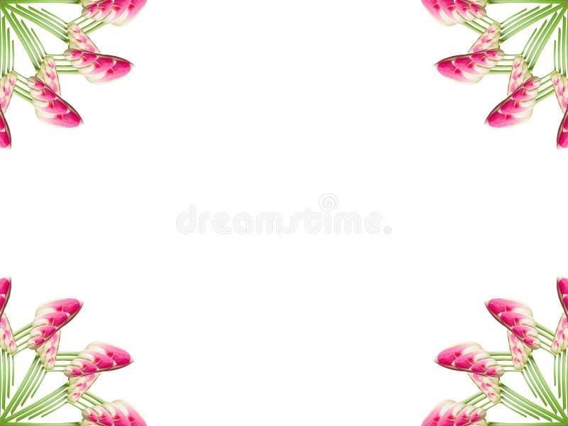 Colagem de flores bonitas cor-de-rosa da tulipa em um fundo branco ilustração royalty free