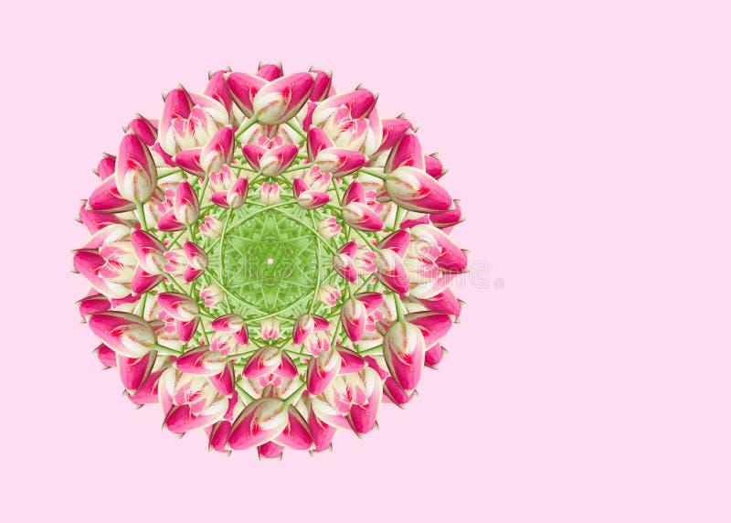 Colagem de flores bonitas cor-de-rosa da tulipa em um fundo cor-de-rosa com espa?o vazio da c?pia fotos de stock
