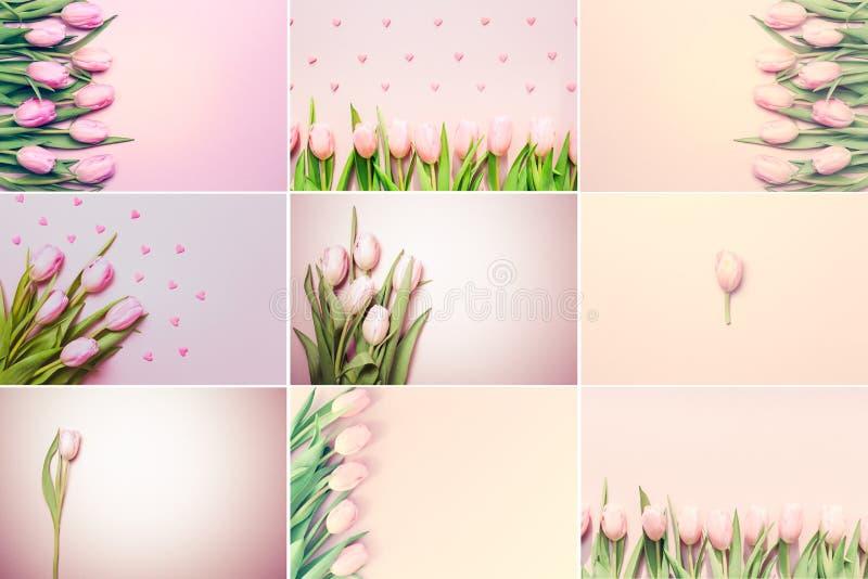 Colagem de fotos cor-de-rosa horizontais das tulipas no fundo cor-de-rosa fotografia de stock