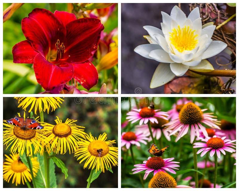 Colagem de fotos das flores na natureza foto de stock