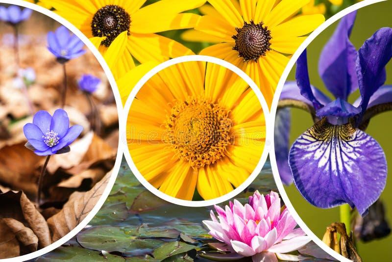 Colagem de imagens das flores imagem de stock