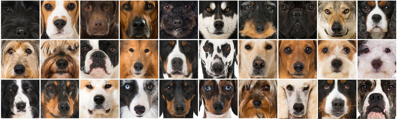 Colagem de muitas cabeças de cão diferentes da raça imagens de stock royalty free