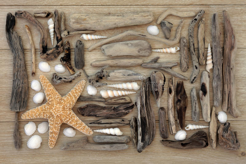 Colagem de Shell e da madeira lançada à costa imagens de stock royalty free