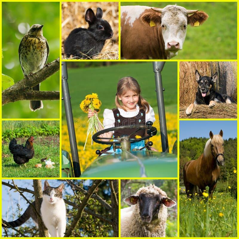 Colagem de várias imagens da vida no campo imagens de stock
