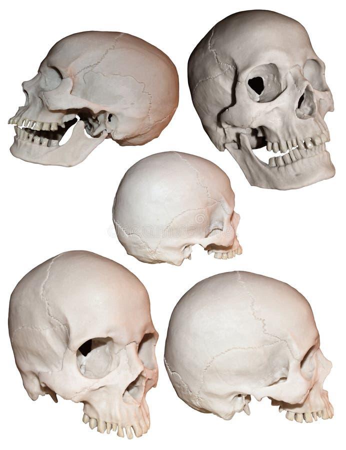 Colagem do crânio imagem de stock