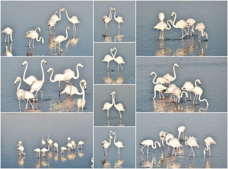 Colagem do flamingo ilustração do vetor