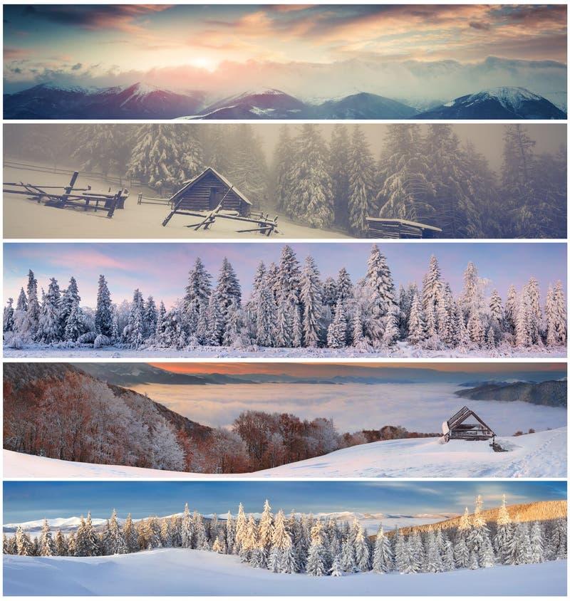 Colagem do inverno com paisagem do Natal para bandeiras imagem de stock royalty free