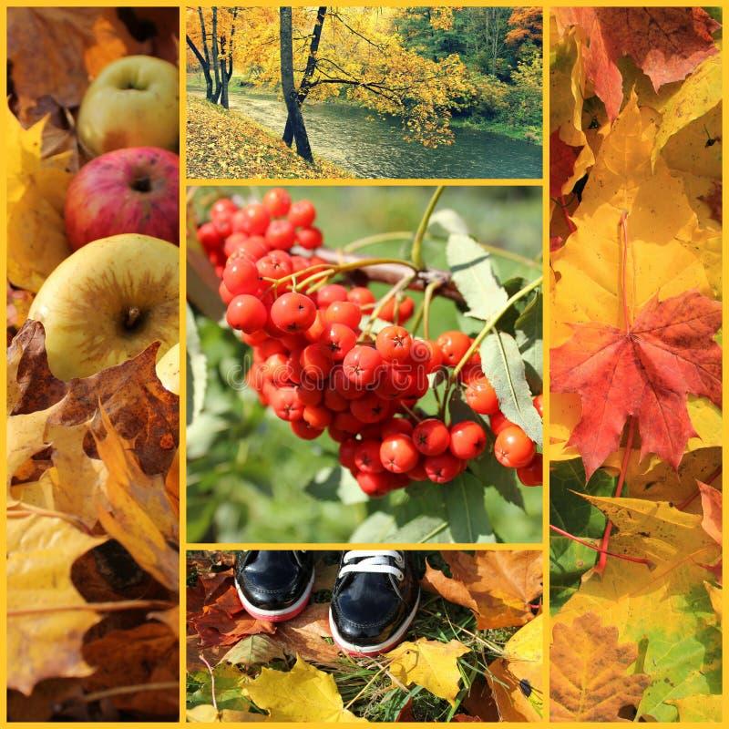 Colagem do outono imagem de stock