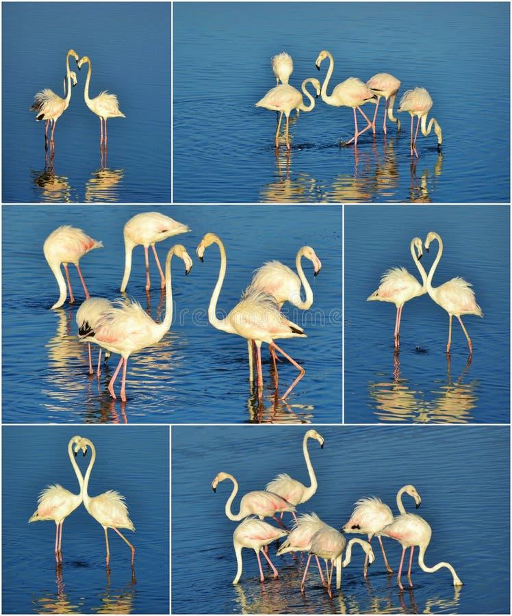 Download Colagem do flamingo imagem de stock. Imagem de animais - 29844249