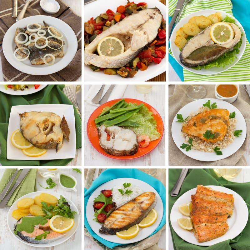 Colagem dos peixes fotos de stock royalty free